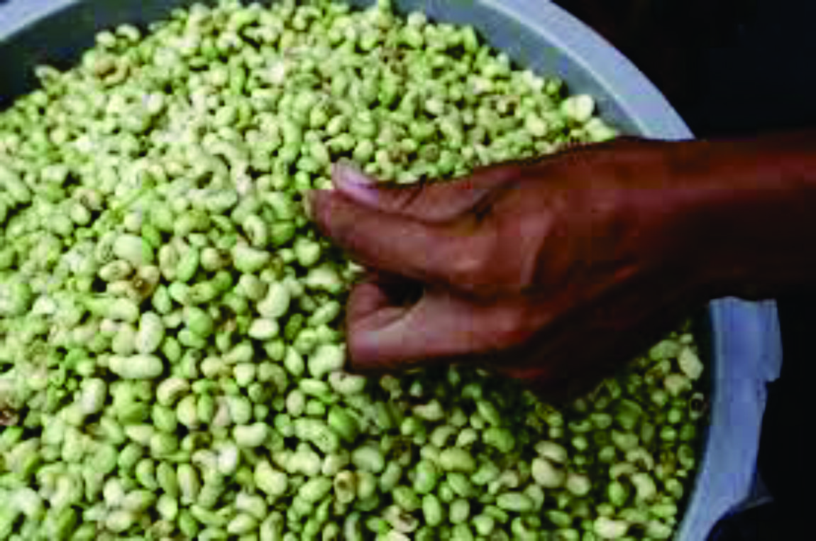 Preço do feijão verde cai 28% na Ceasa-CE