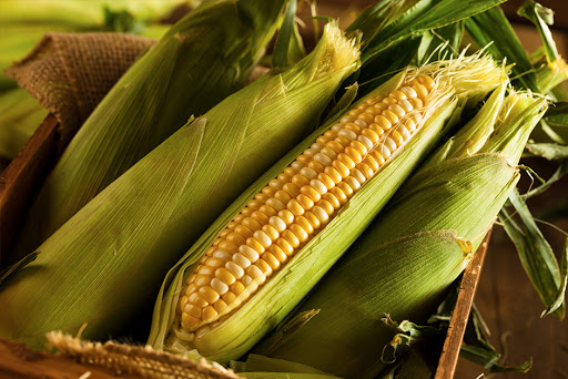 Junho chega com queda no preço do milho verde