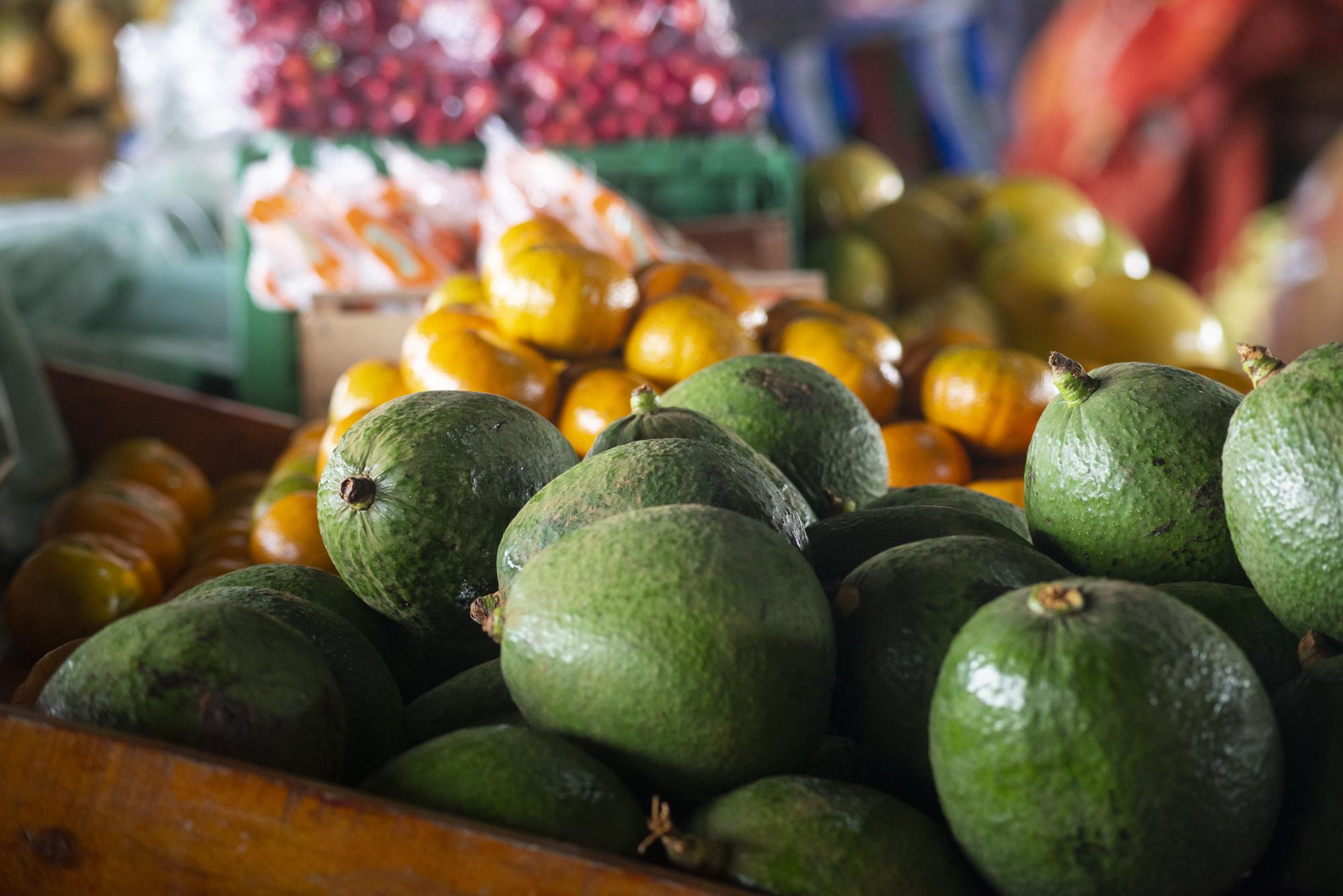 Preço do abacate é destaque na Ceasa-CE