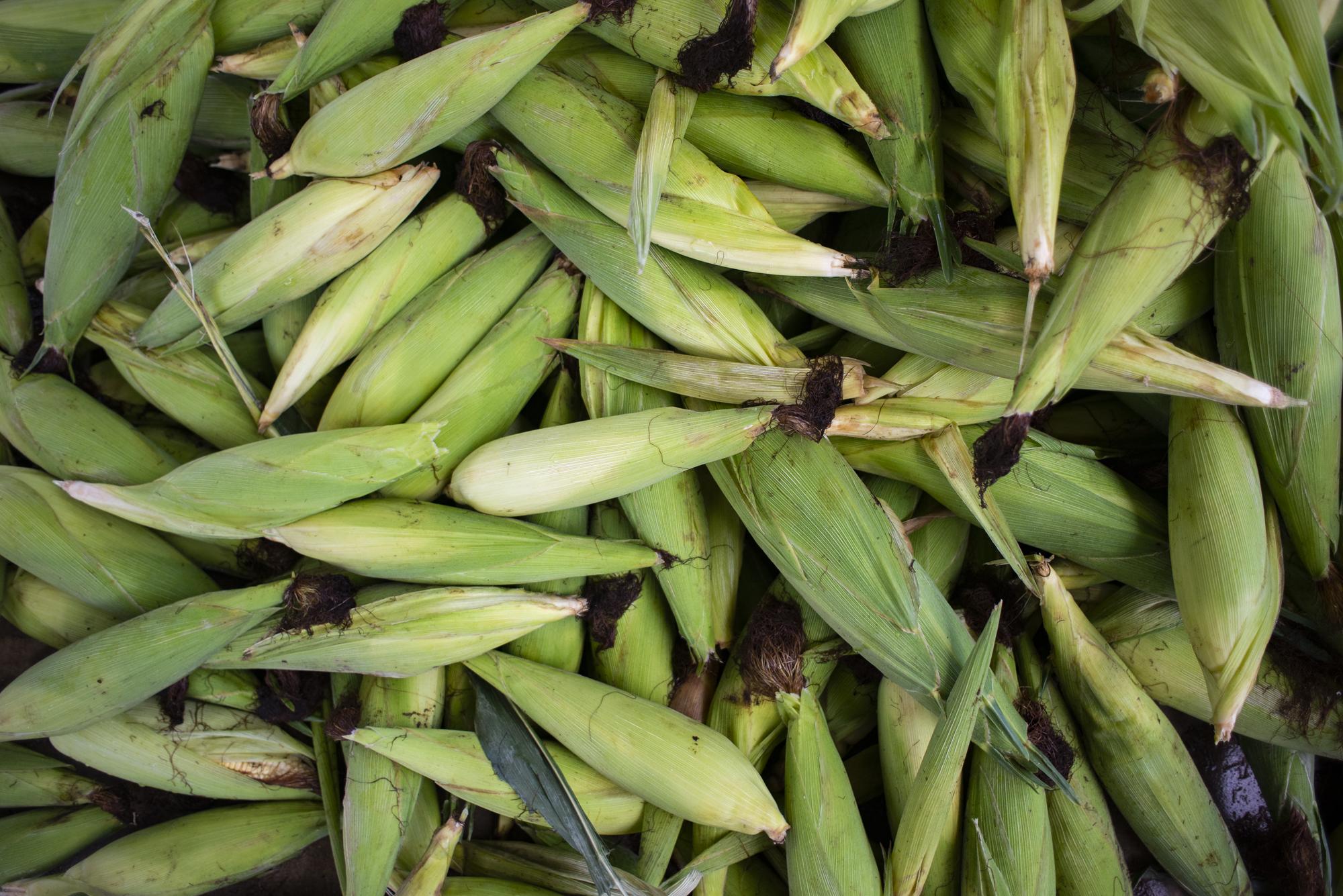 Preço do milho verde tem queda de 25% na Ceasa-CE