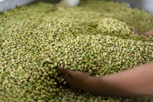 Feijão verde despenca de preço e é vendido a R$ 5,00/kg