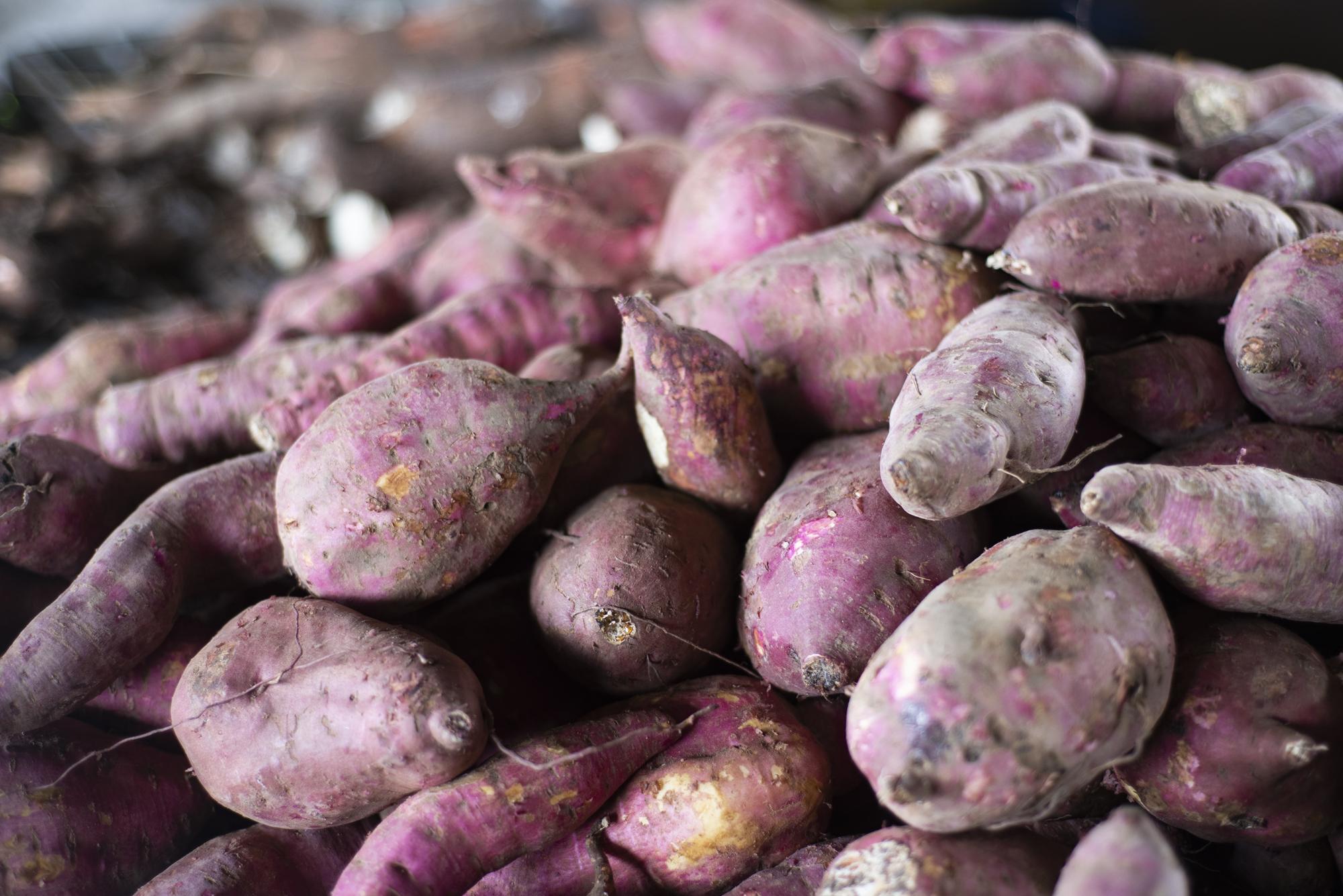 Semana encerra com queda no preço da batata-doce na Ceasa Cariri