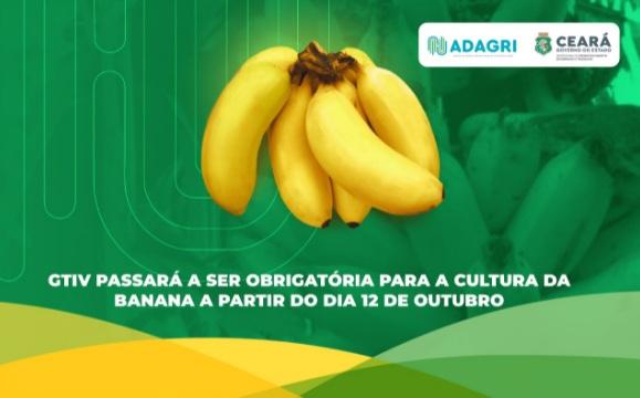 Adagri exigirá GTIV para a cultura da banana a partir de 12 de outubro